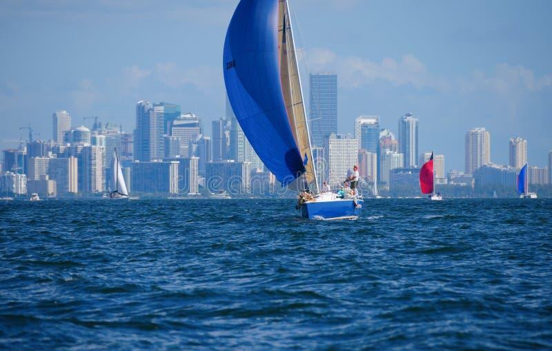 Sailing regatta sailboat race w Miami Florida skyline. 2014 Bacardi Columbus Day Regatta on October 11 Miami, Florida. Sailboats in the race have their colorful royalty free stock photography