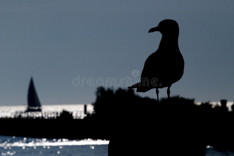 sailboat seagull στοκ φωτογραφίες