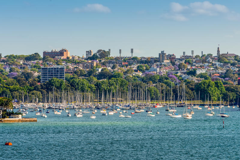 Sailboats at the Double Bay, New South Wales, Sydney. Sydney, Australia - November 12, 2014: View on many sailboats and residential housing in Double Bay from royalty free stock photo