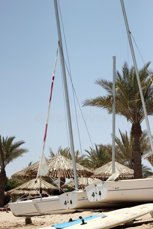 Sailboats parked near surfboards amid palm trees and beach umbrellas stock photography