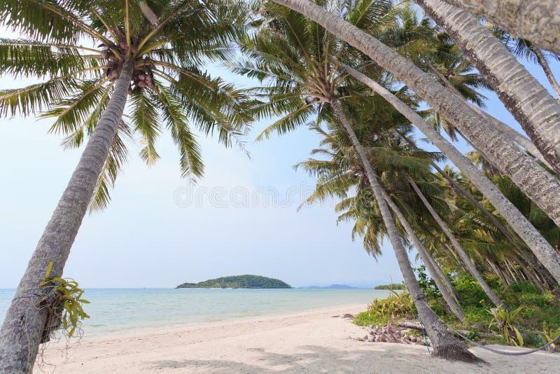 Sailer na praia foto de stock royalty free