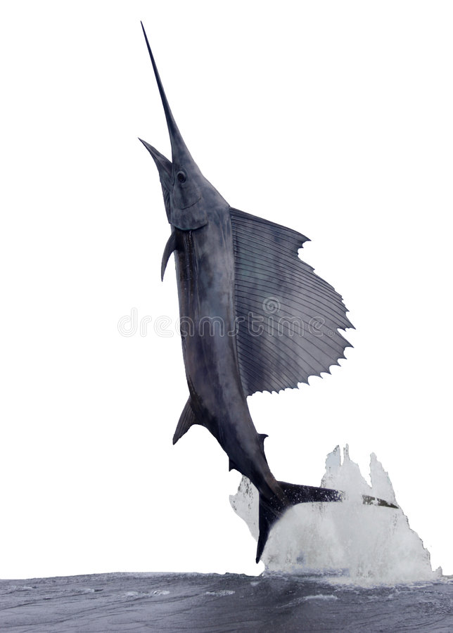 sailfish royaltyfria foton
