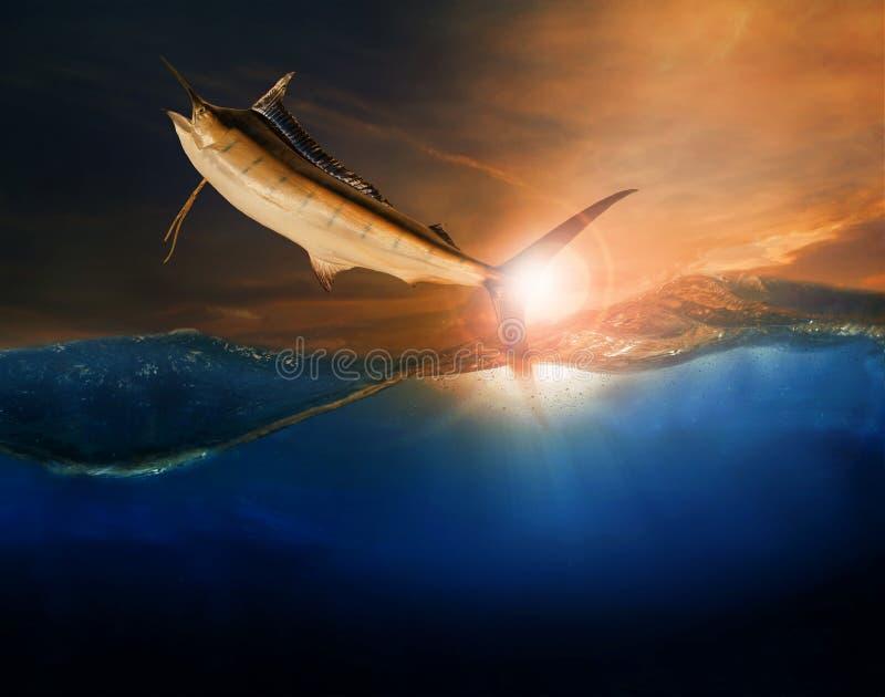 Sailfish som flyger över blått havshavbruk för marin- liv och friare royaltyfri fotografi