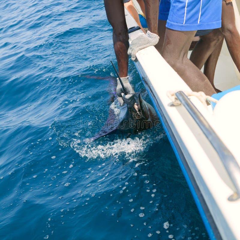 Sailfishlåsbillfish som sportfishing den hållande räkningen royaltyfria bilder