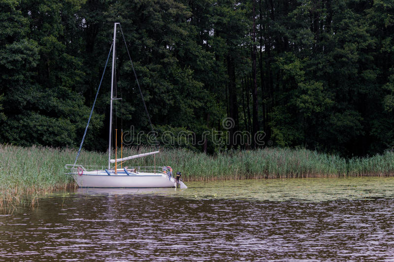 Sailing boat moored in cane on a lake.  stock images