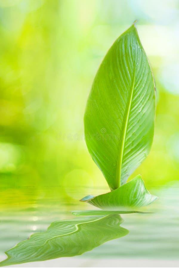 Download Sailing Leaf ( A Journey Of Spirit) Royalty Free Stock Image - Image: 24877276