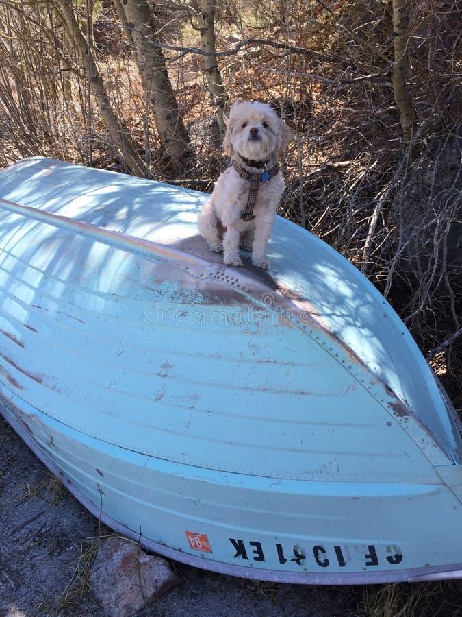 Sailing puppy stock photo