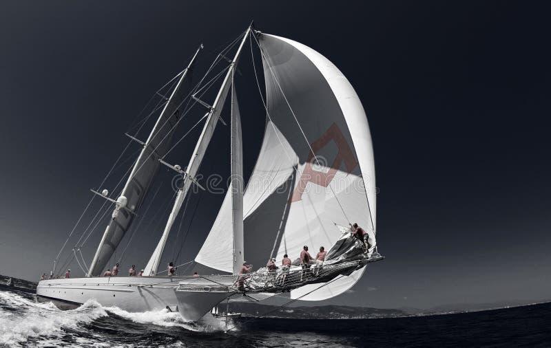 Sailing race 040 royalty free stock photo