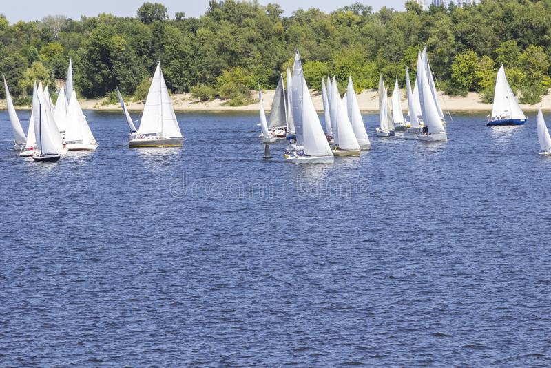 Sailing regatta: many sailboats on the water royalty free stock photos