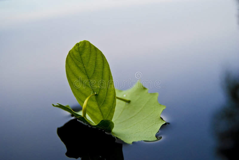 Sailing ship from leafs stock photography
