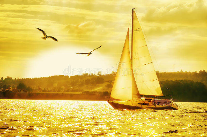 Sailing yacht against the setting Golden sun and flying seagulls stock photo
