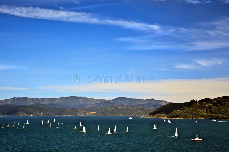 Download Sailing yacht regatta stock photo. Image of land, race - 18607862