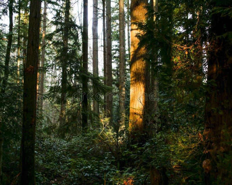 Saint Edwards State Park Free Public Domain Cc0 Image