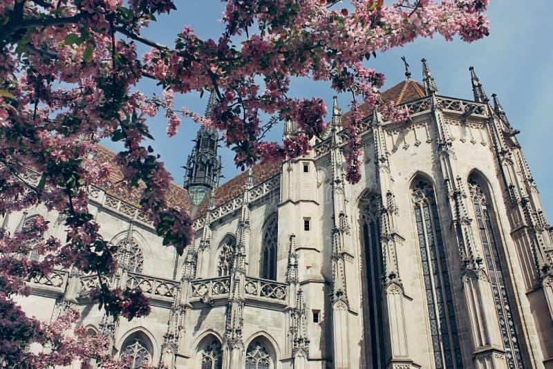 Saint Elizabeth Cathedral à Kosice, Slovaquie image libre de droits