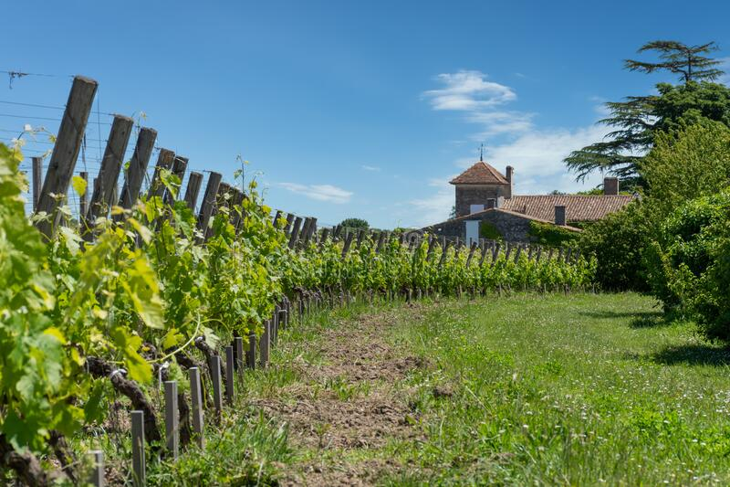 Saint-Emilion, in Gironde, France. The vineyards. Vineyards in the famous village of Saint Emilion, in France stock photos