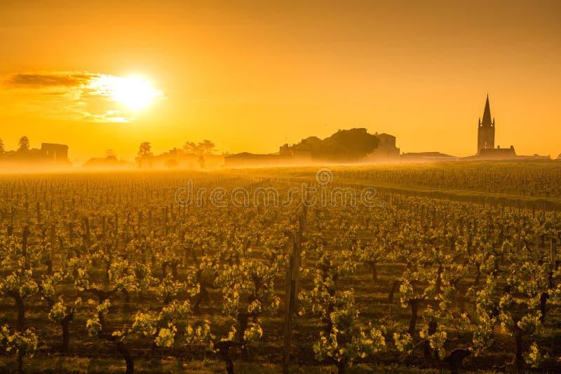 Saint Emilion Sunrise, Bordeaux Vineyard, France royalty free stock photo