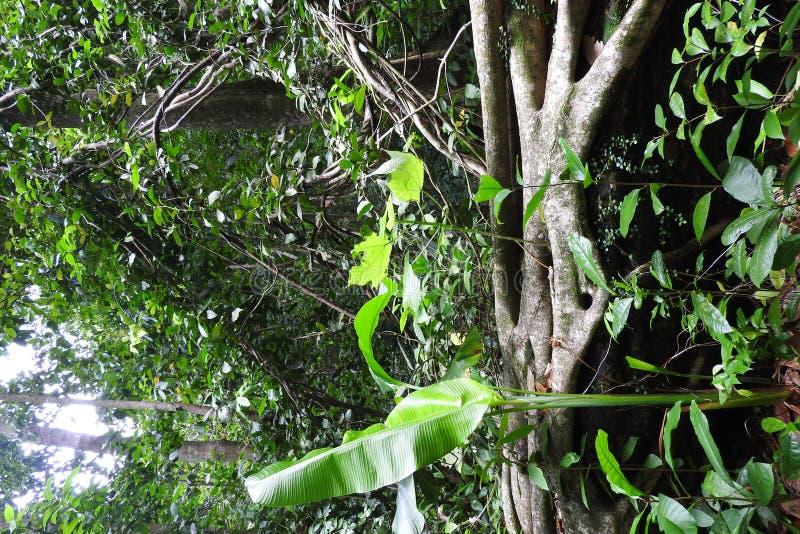 Saint Lucia regnskog December 2016 royaltyfri foto