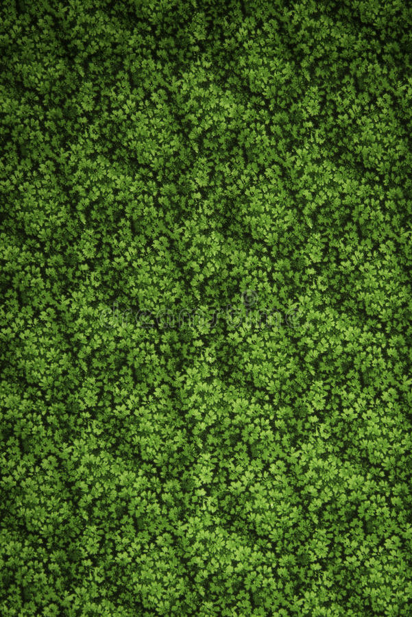 Saint Patrick day clover background. Vertical stock image