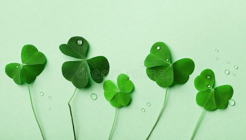 Saint Patricks Day Hintergrund mit Blick auf grünes Shamrock lizenzfreie stockfotos