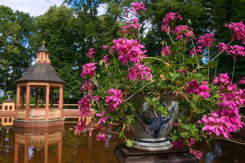 Flowers on the edge of the pond. SAINT PETERSBURG, RUSSIA - AUGUST 18, 2017: Bosket `Menagerie pond` 1720, according to the drawings of Jan Roosen; restored in stock photo