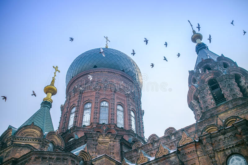 Saint sophia cathedral and pigeons. Saint sophia cathedral in harbin China stock photo