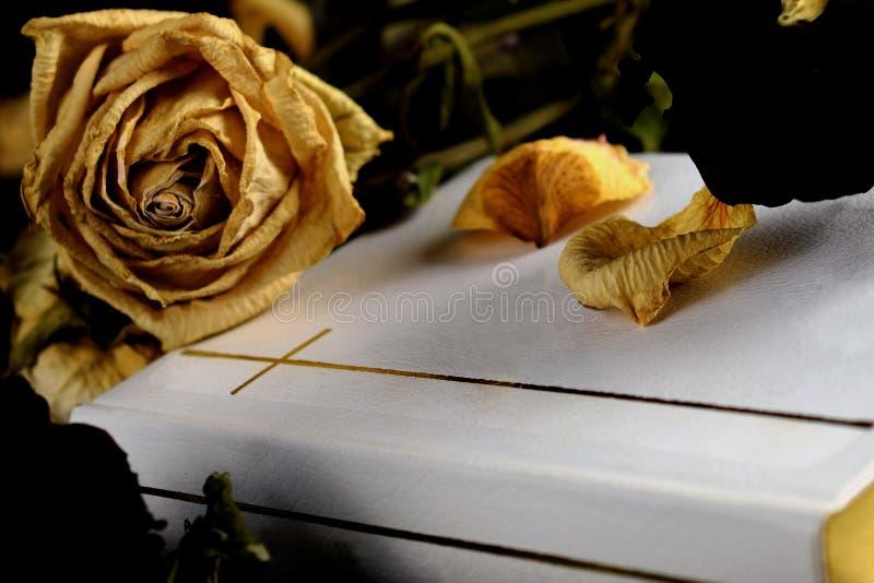 Sainte Bible blanche, fleurs fanées et pétales secs photographie stock libre de droits