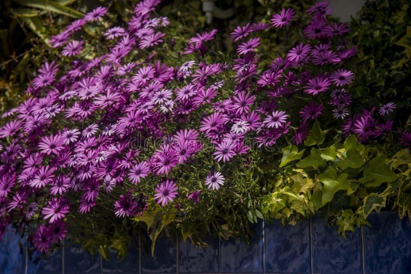 Saisies au jardin et aux tuiles décoratives dehors images libres de droits