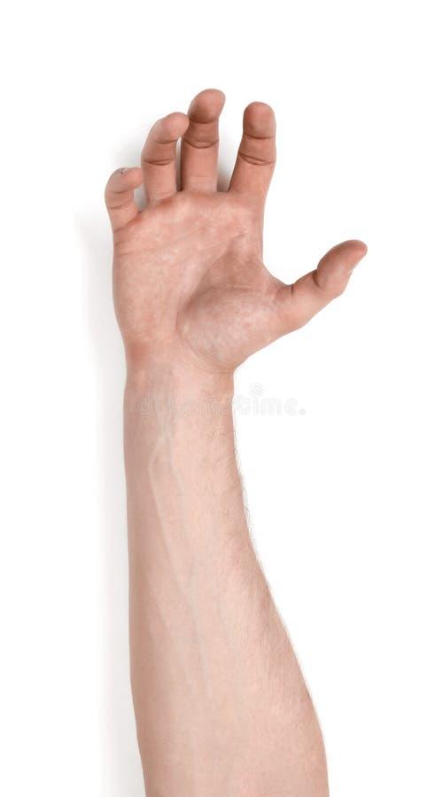 Saisissant la main d'un homme d'isolement sur le fond blanc photos stock
