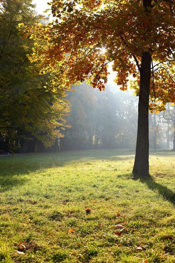 Saison d'automne photo libre de droits