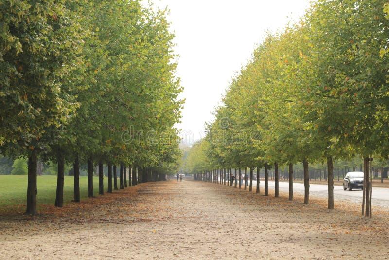 Saison d'automne avec l'arbre jaune photographie stock libre de droits
