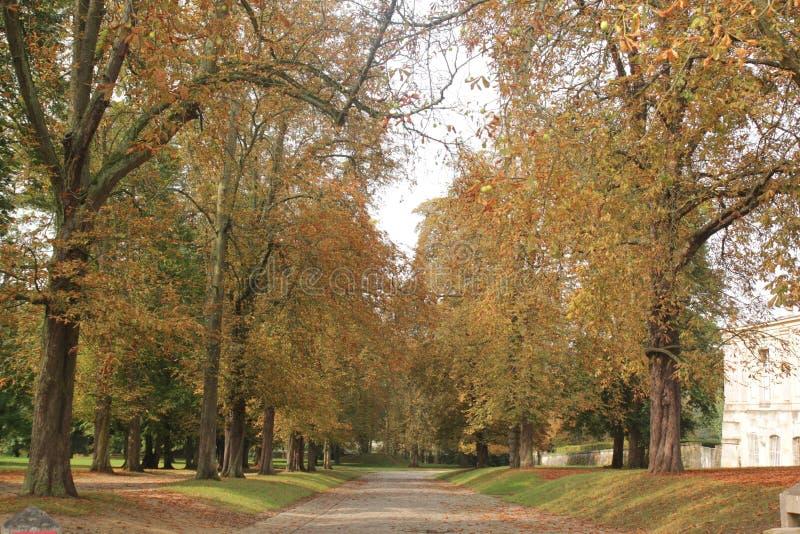 Saison d'automne avec l'arbre jaune images stock