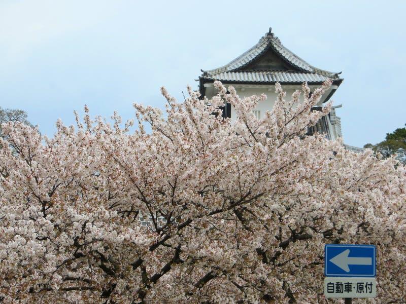 Saison de fleurs de cerisier au Japon image libre de droits