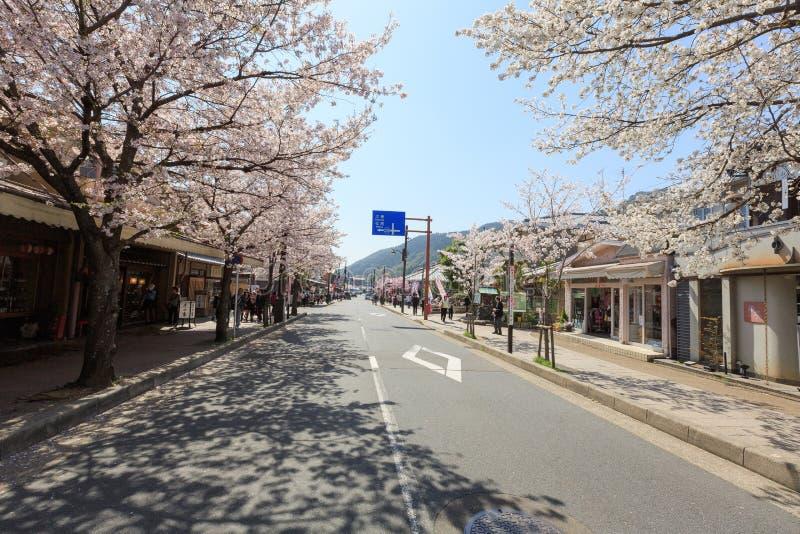 Saison de fleurs de cerisier du ` s du Japon images libres de droits