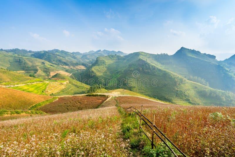 Saison de floraison dans Ha Giang photographie stock libre de droits