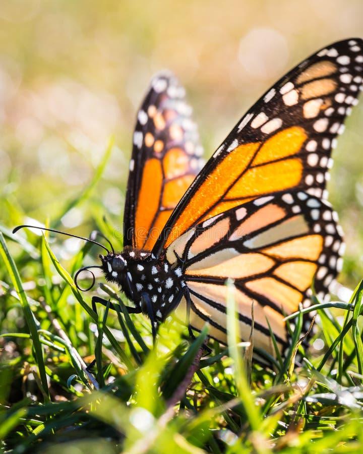 Saison de papillon photo stock