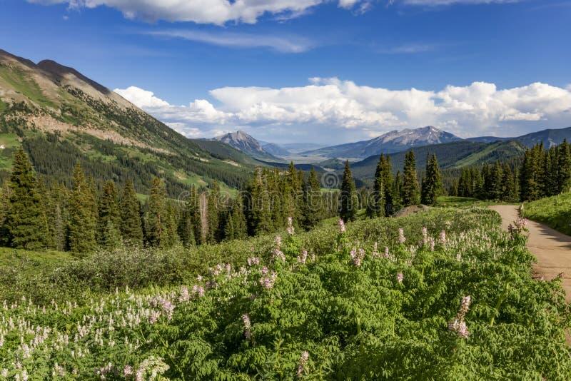Saison de Wildflower le long du flanc de montagne en butte crêtée Colora photo stock