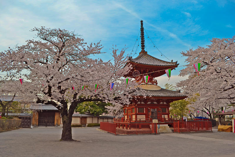 Saison di Sakura nel tempio immagine stock libera da diritti