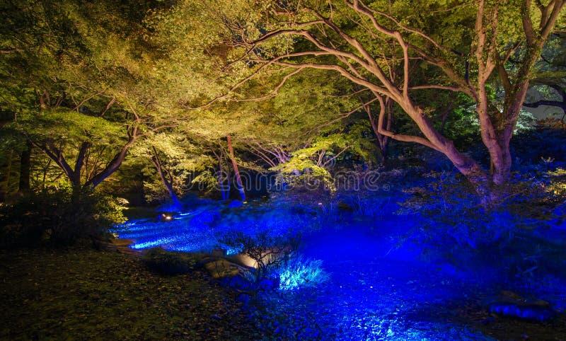 Saisonbeleuchtungen bei Rikugien arbeiten, Tokyo, Japan im Garten stockfoto
