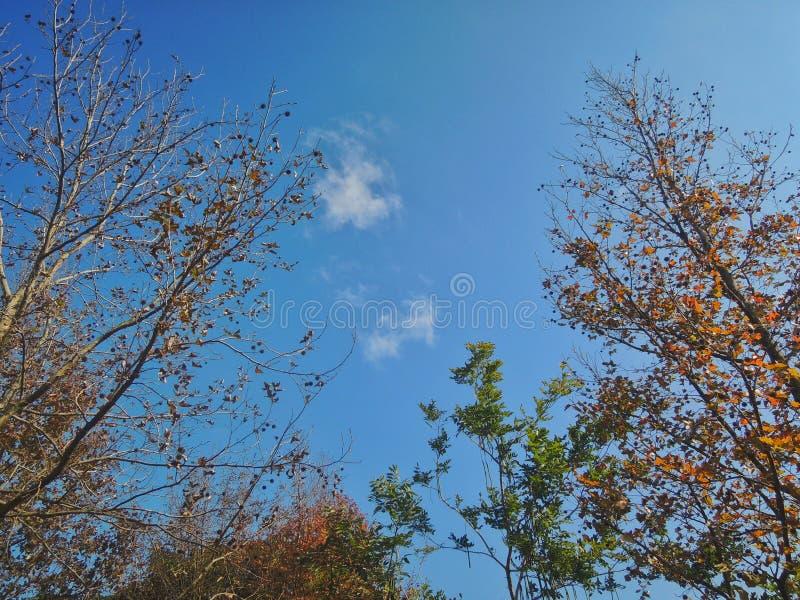 4 saisons des arbres image stock