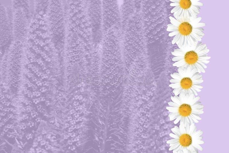 Saisonsommer-Gänseblümchen-und Gras-Hintergrund stockfotografie