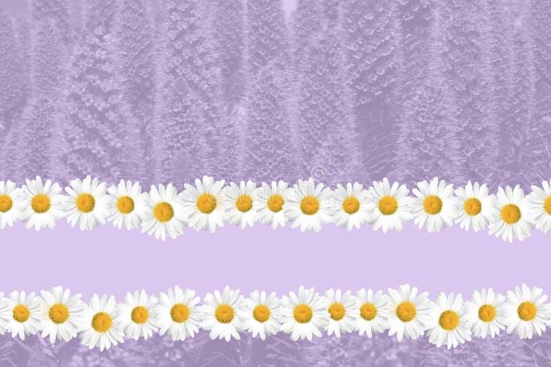 Saisonsommer-Gänseblümchen-und Gras-Hintergrund stockbild