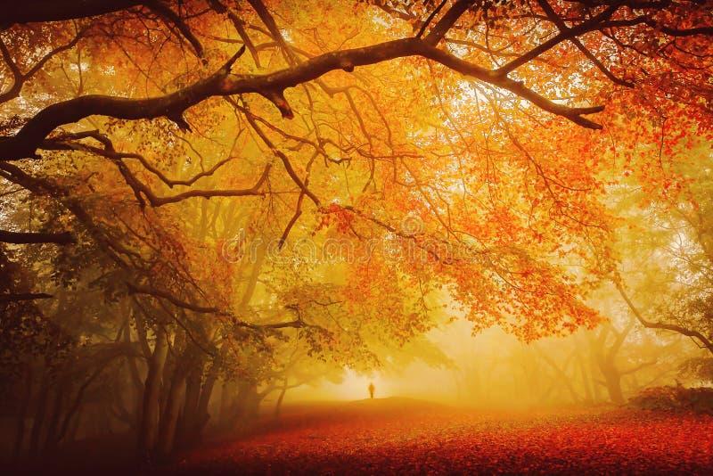 Saisonwaldfallweg stockbilder