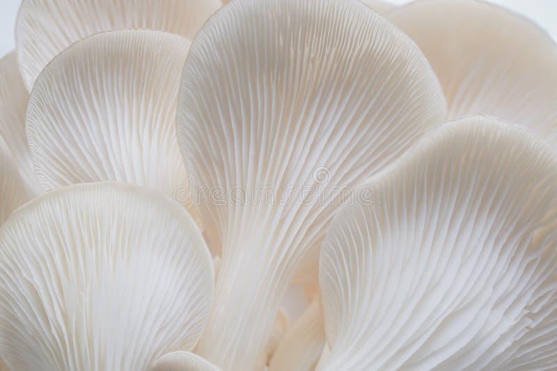 Sajor-caju蘑菇植物抽象自然背景宏指令  免版税图库摄影