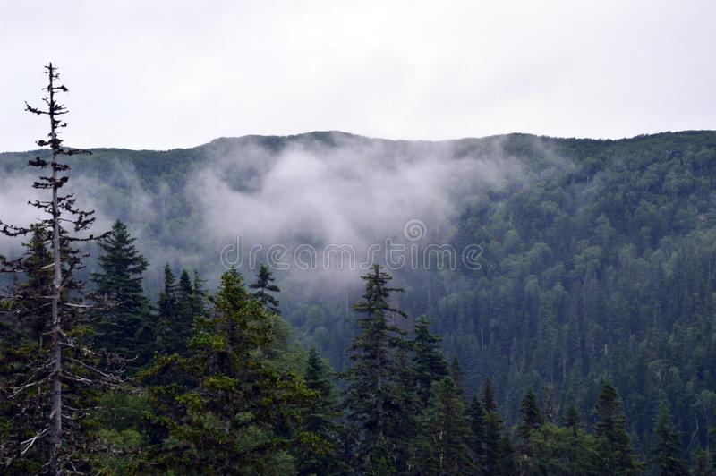 Sakhalin fogy mountains. With pine forest stock images