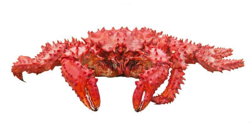 Sakhalin kokade krabban royaltyfria bilder