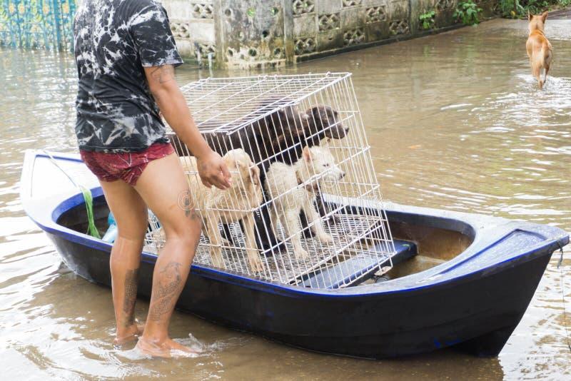 SAKON NAKHON, ТАИЛАНД - 29-ОЕ ИЮЛЯ 2017: Собаки w молодого человека moving стоковая фотография rf