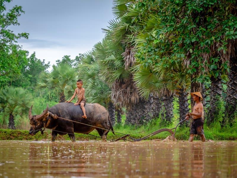 SAKON NAKON, TAJLANDIA LIPIEC 14, 2018 Tajlandzcy rolnicy pracuje z h obrazy royalty free