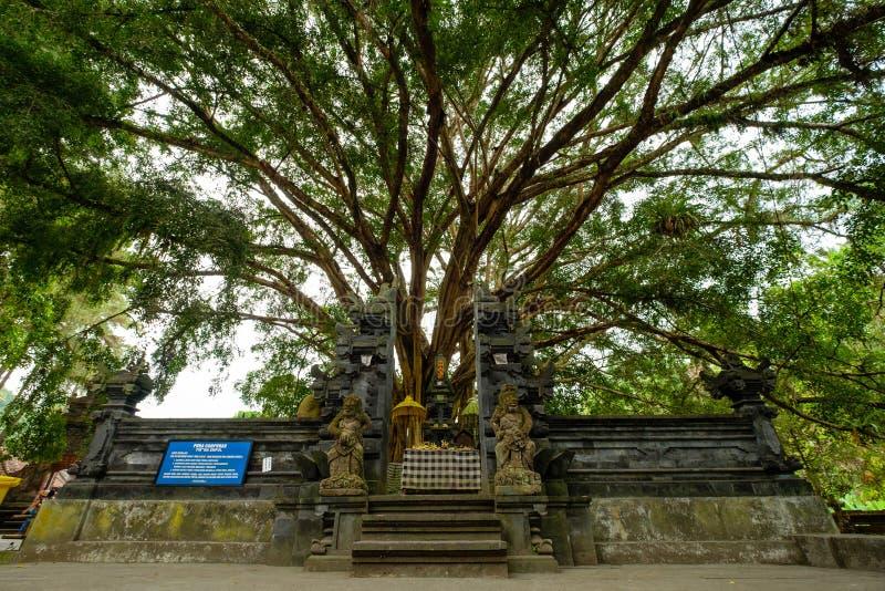 Sakral Campuhan tempel med det stora banyanträdet på bakgrund arkivfoton