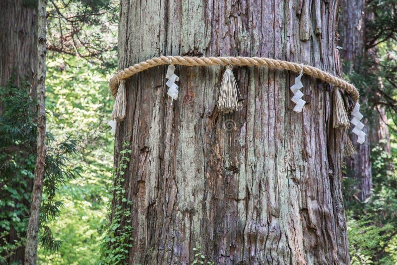 Sakralt japanskt träd på monteringen Haguro fotografering för bildbyråer