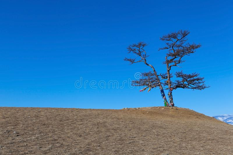 Sakralt sörja trädet av kullen nära medicinman vaggar överst, Baikal sjön arkivfoton